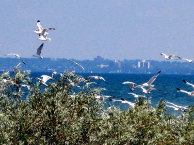 Leamington Ontario viewed from Point Pelee National Park