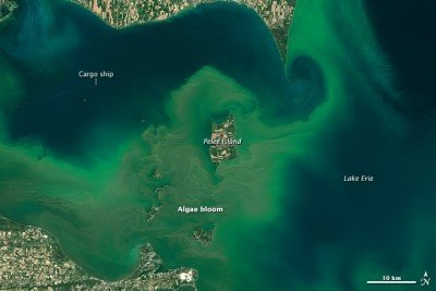 Lake Erie Bloom July 28th 2015